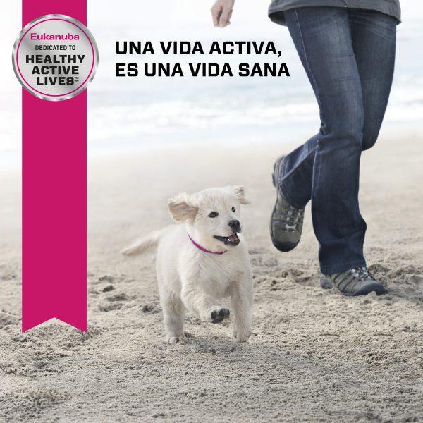 Eukanuba Puppy Razas Pequeñas 3